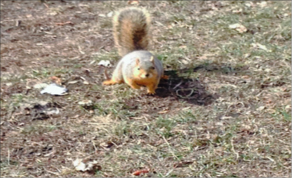 A mascot squirrel breaks character between a double header, an act punishable by the denial of hibernation.